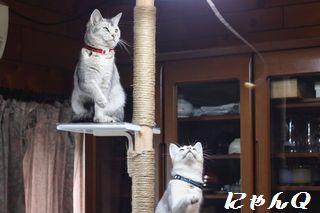 cat_tower32.jpg