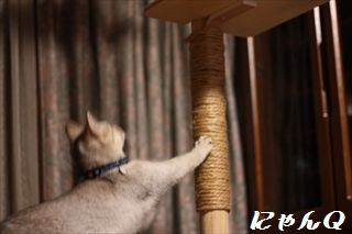 cat_tower48.jpg
