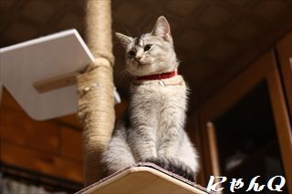 cat_tower49.jpg