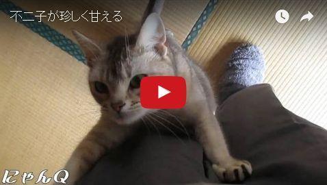 fujiko_amaeru.jpg