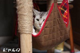hammock02.jpg