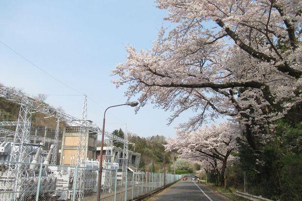 01_siroyama02.jpg