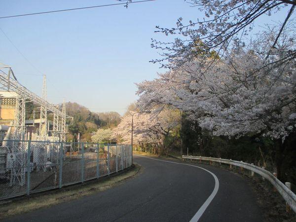 07_shiroyama02.jpg
