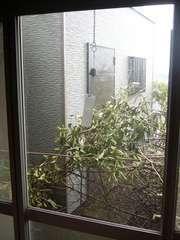 窓の外は梅の枝だらけ