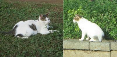 edogawa_cats.jpg