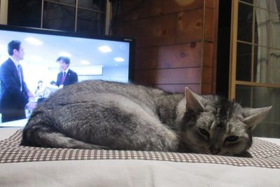 kotatsu03.jpg